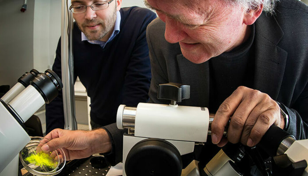 Physicists Paul Dommersnes from the University of Paris, Diderot (left) and Jon Otto Fossum, from the Norwegian University of Science and Technology, have come up with a way to make a novel capsule that could have wide applications in medicine and industry. (Photo: Per Harald Olsen.)
