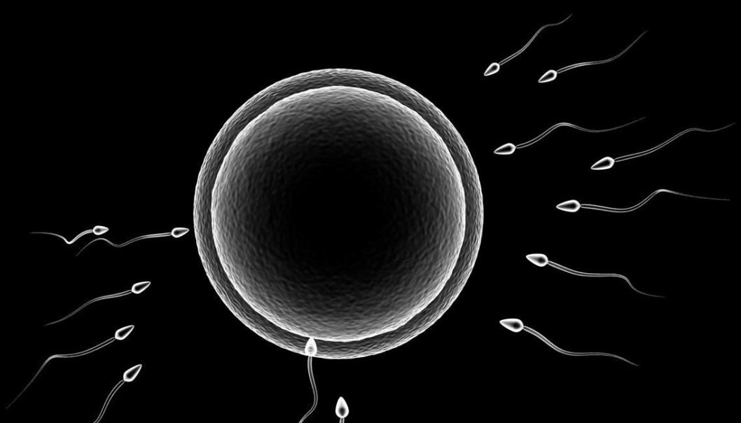 Egg cell meets sperm (Foto: Colourbox)