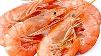 Skagerrak prawn stocks on the rebound
