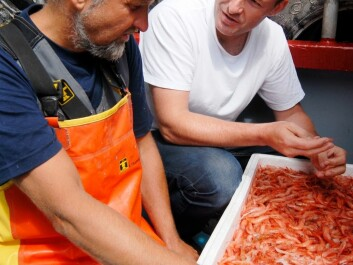 Halvor Knutsen has led a project to give both researchers and prawn fishermen enhanced knowledge about prawn [shrimp] stocks.  (Photo: Øyvind Berg, Institute of Marine Research)