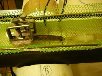 The picture shows a salmon being subjected to temperature changes. (Photo: Katja Anttila)