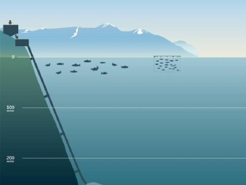 Deep submarine tailings placement in a Norwegian Fjord.  (Illustration: Nordic Mining)