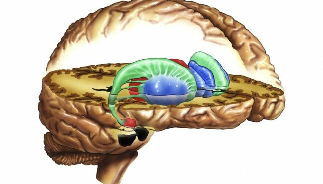 "The researchers looked at the striatum, the ""reward centre"" of the brain. By measuring our reaction to questions related to fairness, equality, work and money, this part of the brain may hold some answers to the issue of how we perceive distribution of income. (Photo: Science Photo Library)"