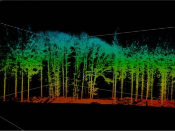 Researchers at Technische Universität München (TUM) in Munich have used laser scans like this to make pictures of how growth changes the structure of the crowns of trees. (Photo: G. Schütze / TUM)