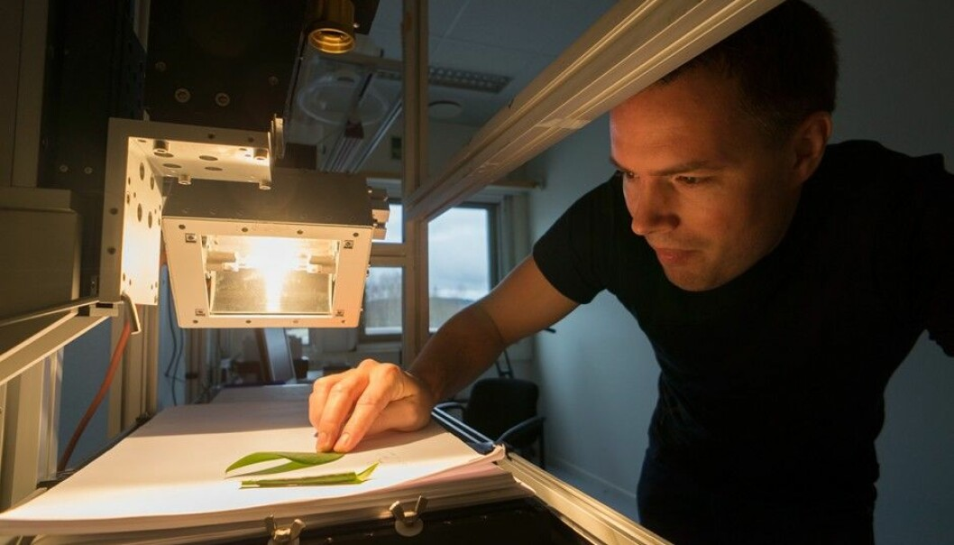 Hallvard Skjerping of Norsk Elektro Optikk (NEO) at work with one of the hyperspectral cameras the company produces. Biological materials, such as leaves, are an example of objects the colour-sensitive camera excels in analysing. (Photo: Arnfinn Christensen, forskning.no)