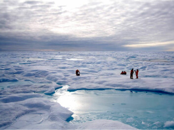 Investigating chemical fingerprints in Arctic sea ice. (Photo: Thomas A. Brown and Simon T. Belt)