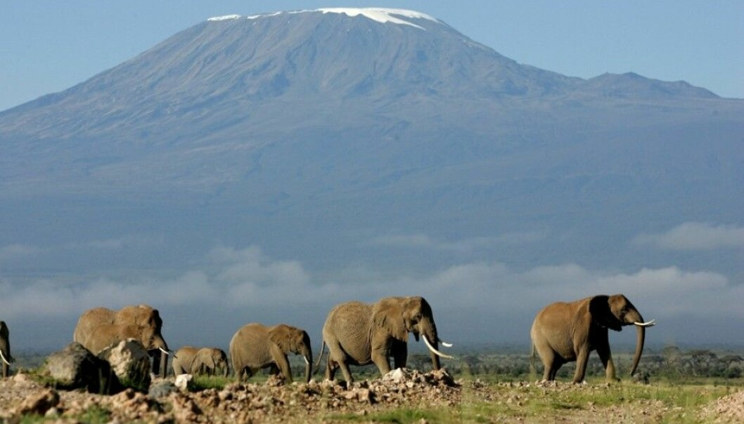 The experience of actually standing at the foot of Kilimanjaro in Kenya and seeing a herd of pachyderms can give you goose bumps. Tourists are increasingly eager to reach exotic destinations. But their carbon footprints are far more elephantine than anything the largest land mammals can make. (Photo: Karel Prinsloo/Scanpix)