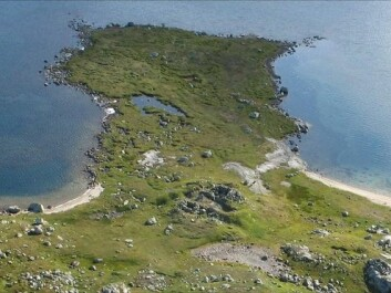 The Sumtangen spit with the ruins of stone buildings from the 1200s. Nearly 50 cubic metres of reindeer bones lie under the green grass turf in the vicinity. The animals were herded into the lake here. (Photo: S. Indrelid, University Musuem of Bergen)