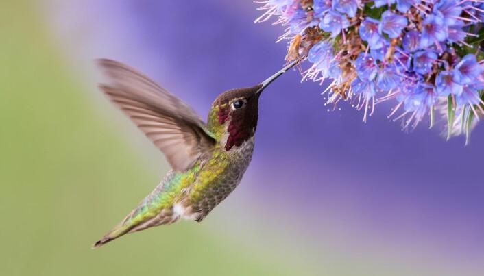 Groundbreaking genome sequencings reveal how birds became birds