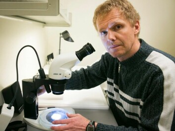Bed bugs might have become resistant to insecticides. Bjørn Arne Rukke studies new methods to combat the bugs. (Photo: Jan Petter Lynau/Scanpix)