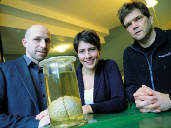 To understand how this huge network of billions of nerve cells in the brain works, Anders Malthe-Sørenssen (on the left), Marianne Fyhn and Gaute Einevoll must resort to enormous computations on the university's powerful computational computer. (Photo: Ola Sæther)