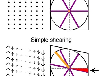 Shearing reproduces both asymmetry and rotation seen in recorded grid cells. Shearing displaces points on a grid proportionally to the distance from a shear axis (left panels). Shearing a grid pattern comes out as turning it elliptical and introducing a rotation to the previously parallel axis (right panels, red area and arrow). (Illustration: Tor Stensola/NTNU Kavli Institute)