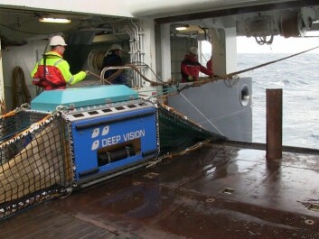 The trawl sends fish through the box, where they are photographed. Behind the box is trawl where the catch will be collected, but the bag can also be left open so the fish swim straight through. (Photo: Lasse Biørnstad)