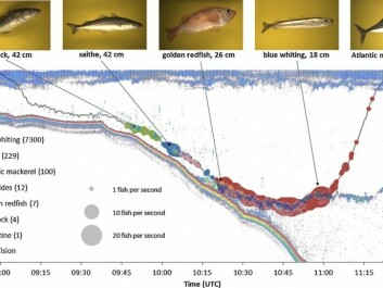 The people behind Deep Vision envisage it being used to sample fish at different ocean depths. This graphic shows sonar images, the route that was trawled, and what kind of fish researchers found at various depths using the camera system. (Image: Shale Rosen)