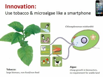 Use tobacco and microalgae like a smart phone. (Photo: Bioforsk)