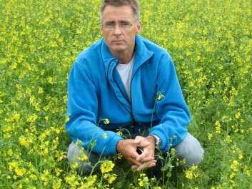 Atle Bones - here in a field of canola plants - wants to convert cannabis to food. (Photo: Trine Magnus)