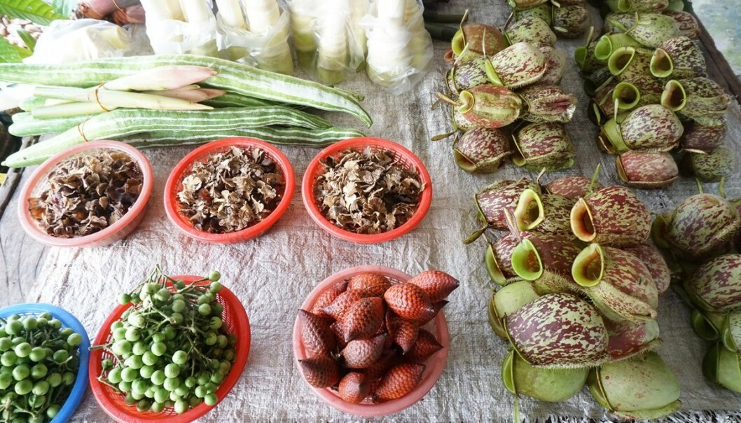 Malaysian market with Nepenthes pitchers for sale (right). (Photo: Rachel Schwallier, Naturalis Biodiversity Center, Leiden)