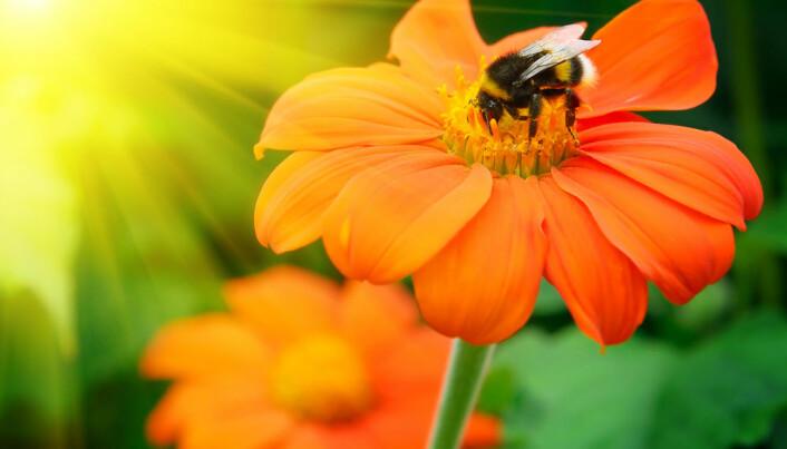 Conserving rare bees has ethical merit but little economic value