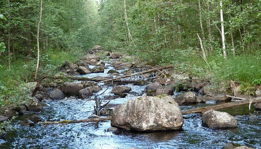 A watercourse restored in 1987. (Photo: Eliza Maher Hasselquist)