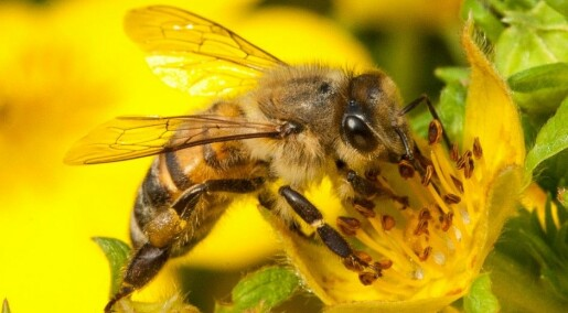 Discovery could yield bee vaccine