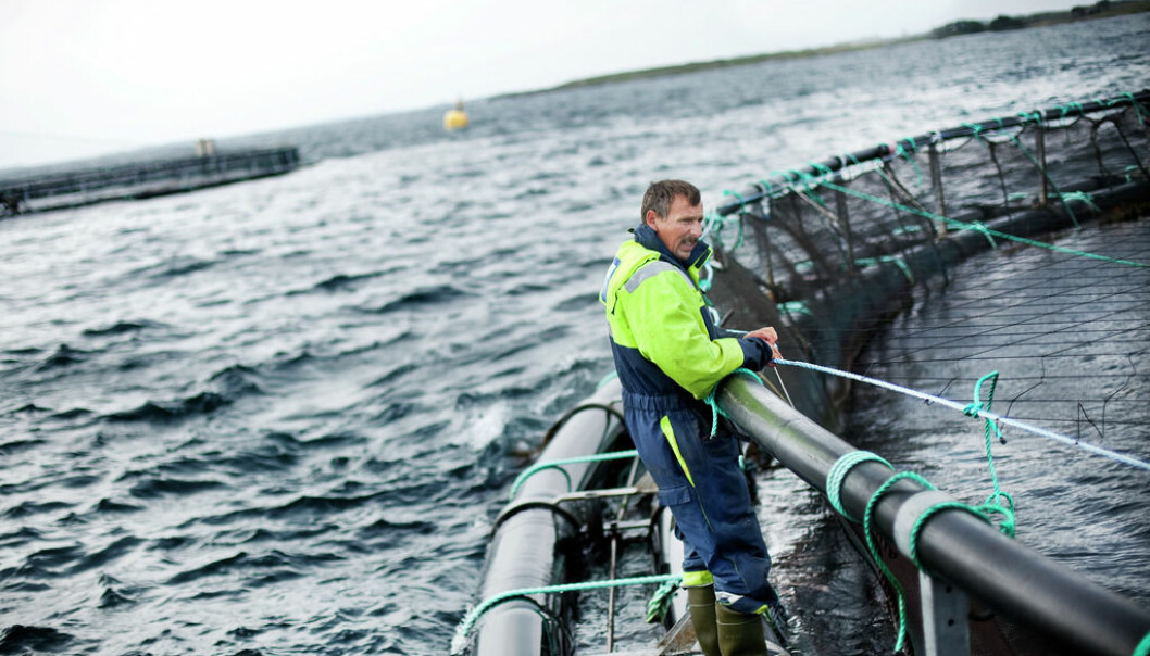Animal welfare also applies to domestic animals under water - floating cages in Rogaland, south west Norway. (Photo: FHL, Seafood Norway)