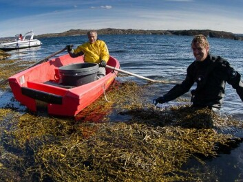 Researchers Trond Amundsen and Sebastian Wacker heading out into the kelp forest. (Photo: Per Harald Olsen, NTNU)