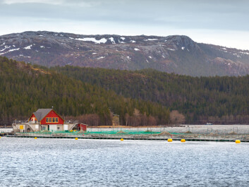Many Norwegians have visited a farmyard but only a very few have been to a salmon farm. (Illustration photo: Microstock)
