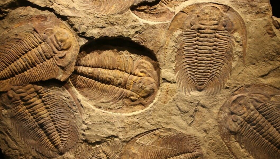 Trilobites lived in the sea for over 270 million years. Some changed a lot, while other species stayed the same for millions of years. (Illustrative photo: Microstock)