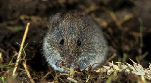Rodent population swings remain a mystery