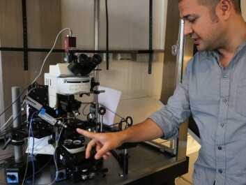 Researchers can use highly sensitive optical microscopes to look into larval zebrafish brains. (Photo: Nancy Bazilchuk, NTNU)