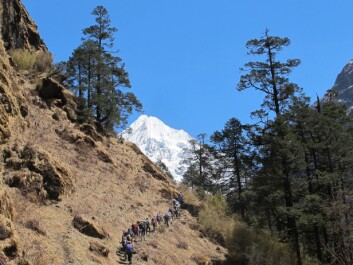 Mountain trekkers often use the hike into the Himalaya as a way to acclimatize to high altitudes. Here, researchers hike in the Rolwaling Valley in Nepal. (Photo: Harald Engan, Mid Sweden University)
