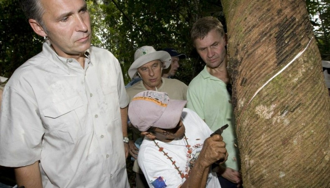 Prime Minister Jens Stoltenberg, Environment and International Development Minister Erik Solheim and Brazil's Environment Minister Carlos Minc (rear centre) watch as a man named Tasso taps a rubber tree in the Amazon rainforest in 2008. (Photo: Bjørn Sigurdsøn, NTB Scanpix)