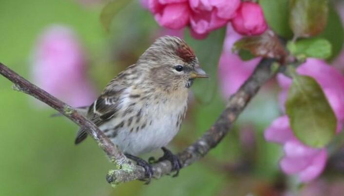Climate and intensive farming push European birds into decline