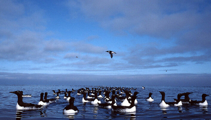 Protecting Greenland's animals from oil spills