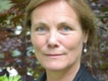 Birgit Lie treats refugees with traumas after wars and terrorist attacks at the Hospital of Southern Norway. She thinks the health system alone will be unable to help all the large influx of refugees with all their mental problems. Non-professionals, regular citizens, need to lend a hand. (Photo: Hospital of Southern Norway)