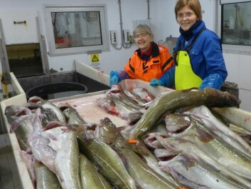 Researchers with some of the day's catch, studying the quality of the fish. Project leader Hanne Digre to the right and engineer Marte Schei to the left. (Photo: SINTEF)