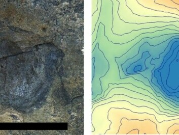 The tracks were photographed and converted into three-dimensional models (right). Here is the track from a forefoot that shows that this was not a carnivorous dinosaur. (Photo: Hans Arne Nakrem, Natural History Museum, University of Oslo)