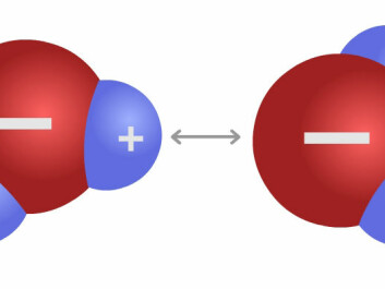 Two water molecules. The positive charge of hydrogen atoms attracts the negative charge of an oxygen atom. This is called a hydrogen bond and it causes both adhesion and cohesion in water. (Figure: Arnfinn Christensen)
