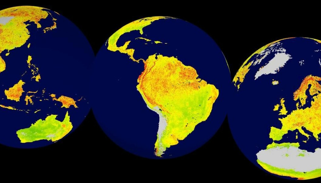 Global map of the Vegetation Sensitivity Index (VSI), a new indicator of vegetation sensitivity to climate variability using satellite data. Red colour shows higher ecosystem sensitivity, whereas green indicates lower ecosystem sensitivity. Grey areas are barren land or ice covered. Inland water bodies are mapped in blue. (Illustration: Alistair Seddon.)