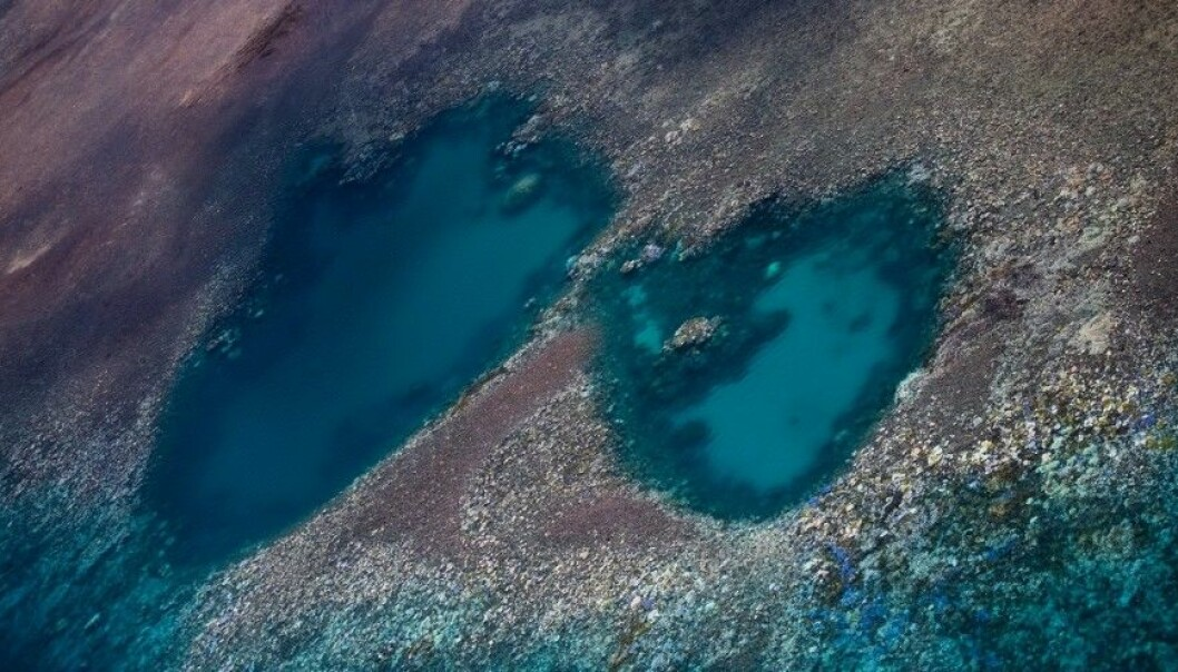 Most of the northern half of the Great Barrier Reef has been bleached. (Photo: ARC Center of Excellence)