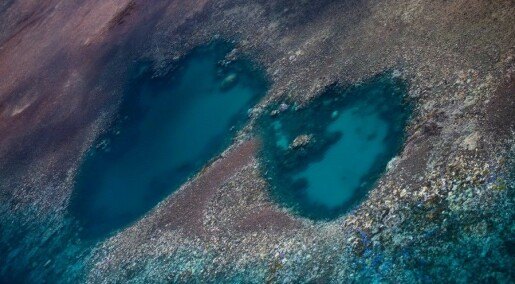 The Great Barrier Reef is in trouble