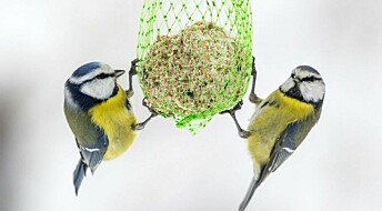 Why do female birds mate with more than one male?