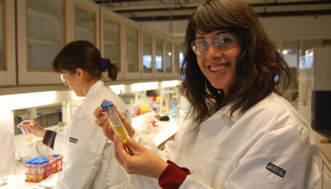 """Researchers in Trondheim process the fats from dead laying hens as one stage in attempts to make a new and profitable dietary supplement. """"It smells like chicken soup, but we still haven't achieved the right taste,"""" says Research Manager Ana Carvajal at SINTEF Fisheries and Aquaculture. (Photo: Anne Lise Stranden, forskning.no)"""