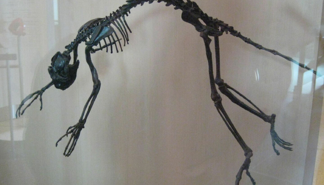 Notharctus tenebrosus looks like a lemur and researchers say the same applies to Darwinius masillae – the fossil known as Ida. (Photo: Claire Houck/Wikimedia Creative Commons)