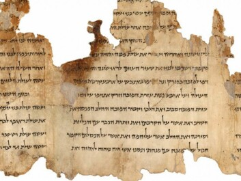 A portion of the Temple Scroll (Photo: The Israel Museum's Digital Dead Sea Scrolls project)