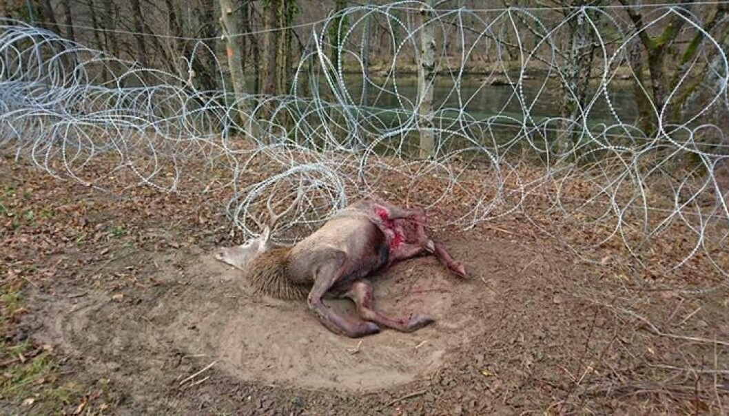 Wire fences are proving to be a fatal trap for wildlife living in the area. (Photo: Dejan Kaps)