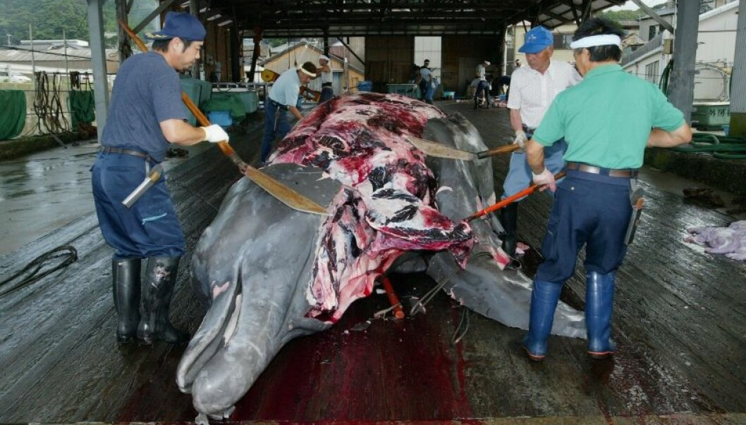 Whaling is a highly emotional issue internationally. A proposed cap-and-trade system would save the whales and allow countries like Japan and Norway to continue making a little money off them. (Photo: Istockphoto)