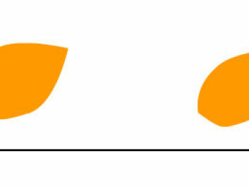 Mushroom on the left - leaf to the right. The more clearly the forms settle out to either side, the easier it is for SVM to separate them. Here the dividing line falls far to the left - towards the round shape. But what if the leaf is round? (Figure: Arnfinn Christensen, forskning.no)