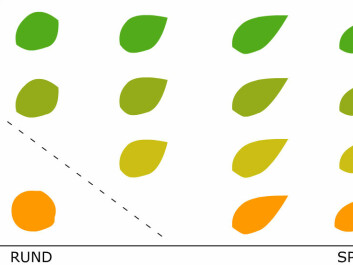 Here SVM looks at two different properties - round or pointed shape and yellow or green colour. SVM does better with several different types of leaves and a mushroom. But what if both the leaf and the mushroom are round? SVM can use hundreds of different features to distinguish objects in an image. (Figure: Arnfinn Christensen, forskning.no)