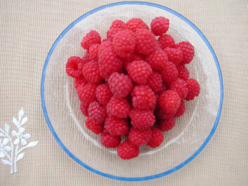 The norovirus has turned up on raspberries in some parts of the world. (Foto: Anita Sønsteby)